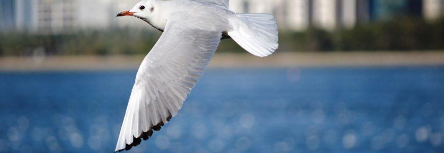 Skåda fåglar från båt
